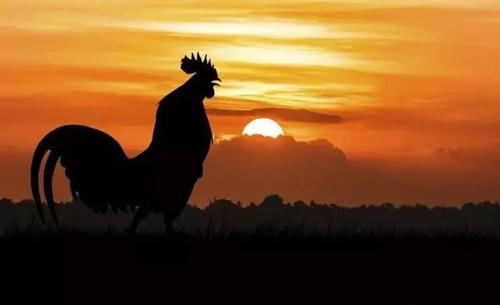 """""""起的比鸡早,睡的比狗晚""""是什么意思?"""