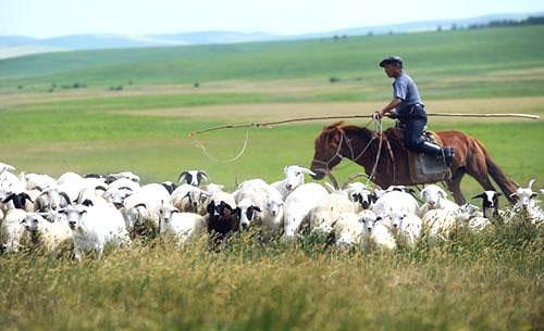 """""""天苍苍,野茫茫,风吹草低见牛羊""""是什么意思?"""