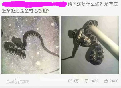 """""""老底坐穿蛇""""是什么意思?"""