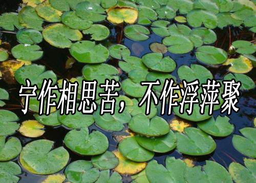 """""""宁作相思苦,不作浮萍聚""""是什么意思?"""