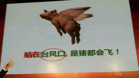 """""""站在风口上,猪都会飞""""是什么意思?"""