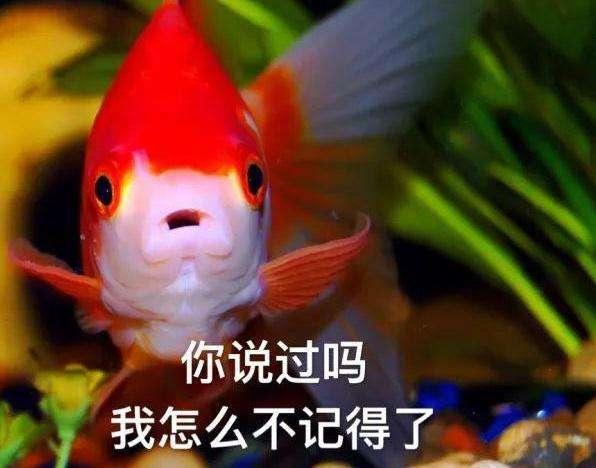 """""""金鱼系男友""""是什么意思?"""