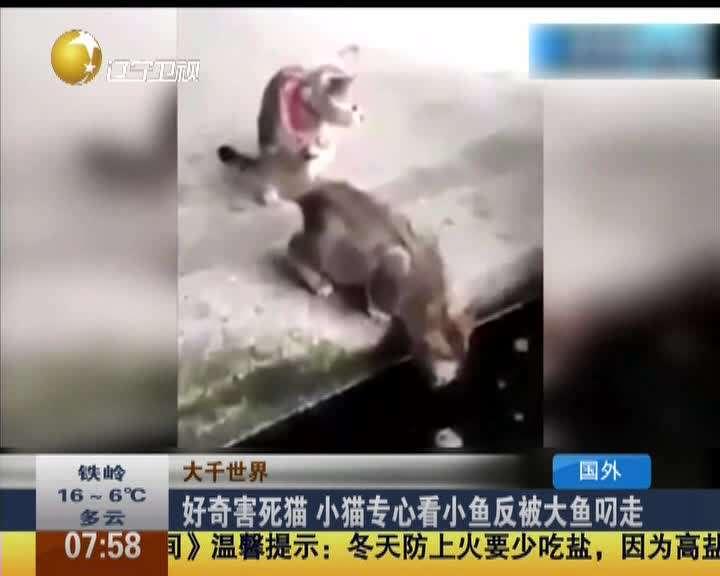 """【西方谚语】""""好奇害死猫""""是什么意思?"""
