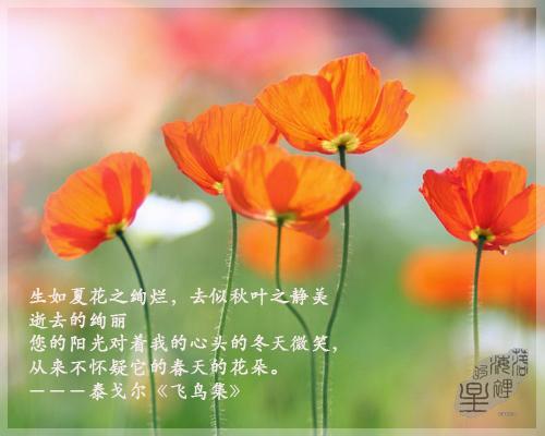 """""""生如夏花之绚烂,死如秋叶之静美""""是什么意思?"""