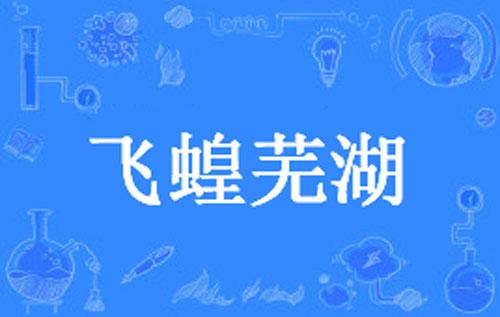"""【网络用语】""""飞蝗芜湖""""是什么意思?"""