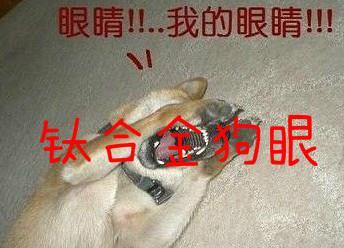 """【网络用语】""""钛合金狗眼""""是什么意思?"""