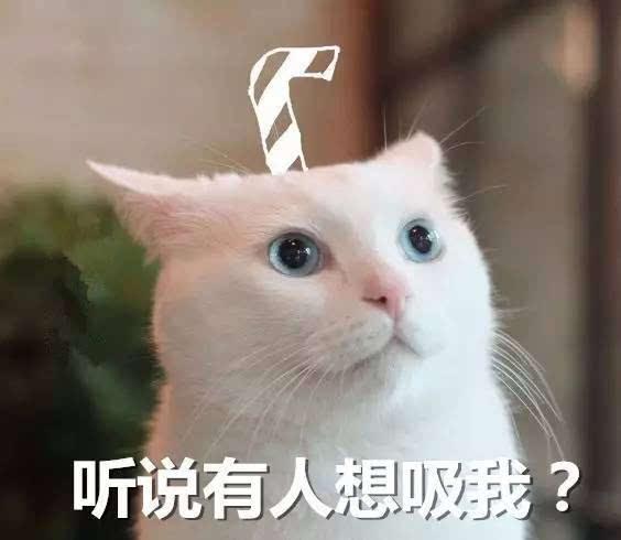 """【网络用语】""""吸猫""""是什么意思?"""
