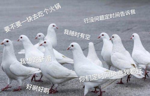 """【网络用语】""""鸽子友谊""""是什么意思?"""